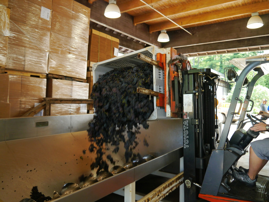 Processing Grapes